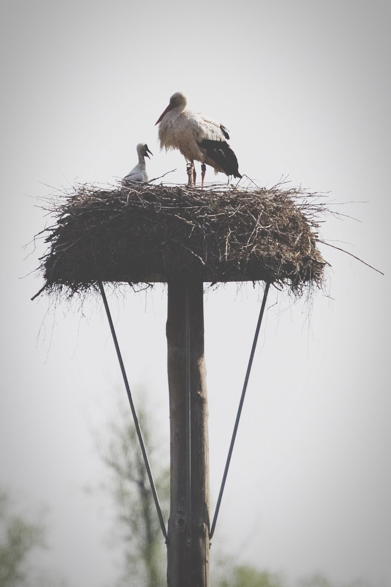 ©415 Newborn storks Stork Bird Bird Photography Canonphotography Bird Nest The Great Outdoors - 2017 EyeEm Awards Exceptional Photographs EyeEm Masterclass Simple Quiet Love EyeEmNewHere First Eyeem Photo BYOPaper! EyeEm Gallery The Week Of Eyeem Showcase May Live For The Story Taking Photos Nature_collection Nature Photography Nature On Your Doorstep Photooftheday Newborn Different Perspective New Life Photography Is My Escape From Reality!