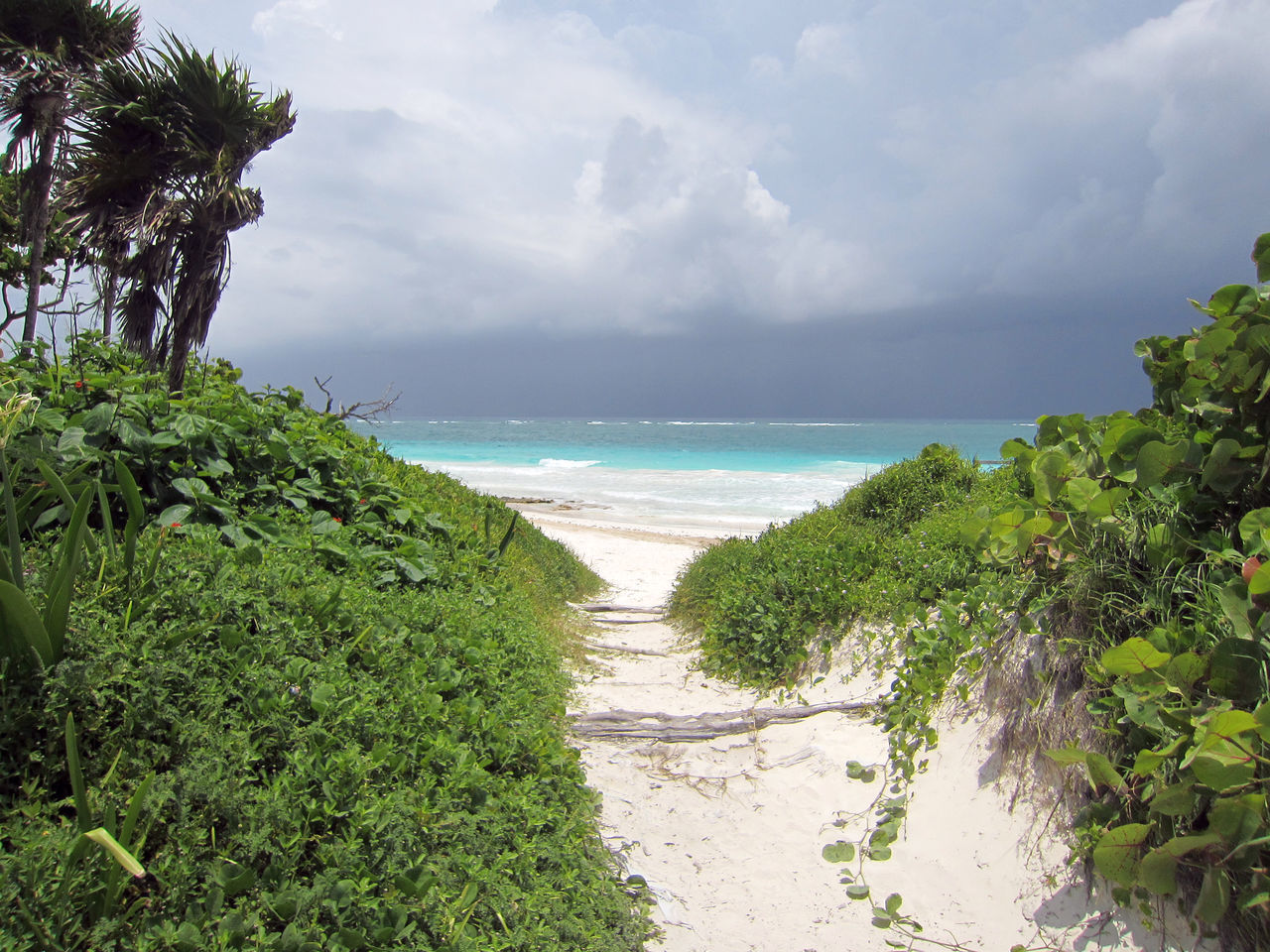 Carribean beach - Tulum - Quintana Roo - Mexico Beach Beauty In Nature Carribean Carribean Sea Cloud - Sky Coastline Horizon Over Water Nature Outdoors Palm Tree Sand Scenics Sea Stormy Sky Vacations Water Wave