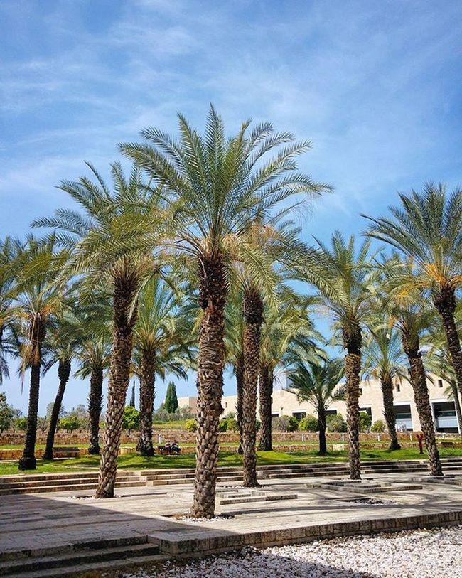 🌴🌴🌴 Palmtrees Israel Nofilter Travelingram Travel Musttravel Sky Bluesky Clouds Bengurionairport Wanderlust Family Familyholiday Seetheworld