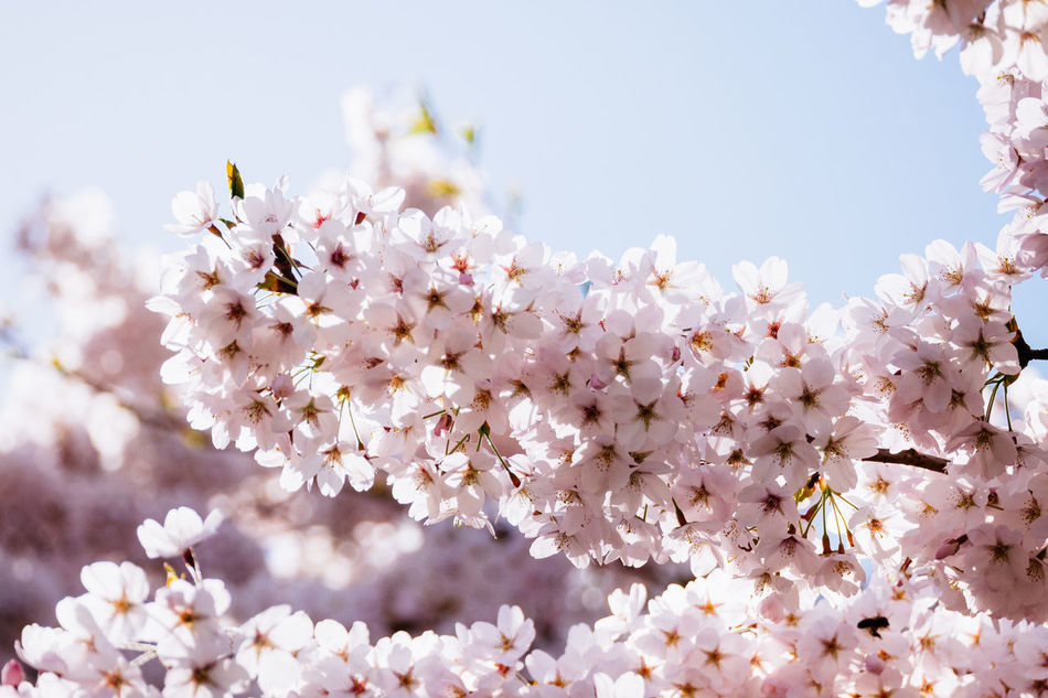 Beautiful stock photos of heaven, Beauty In Nature, Blooming, Blossom, Branch