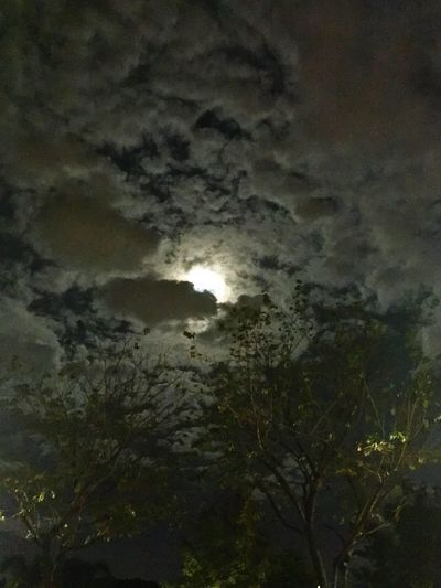 Luna in the dark Sky Nature Beauty In Nature Low Angle View Cloud - Sky Scenics No People Tranquil Scene Night Moon Outdoors Sunset Growth Tree Tranquility Storm Cloud