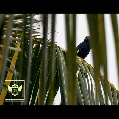 That bird tho.... it keeps hiding has i zoom further ?Nature Jiniuskonxeptsphotography Photography