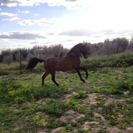 Caballos Caballo ESPAÑOL Horses Beautiful
