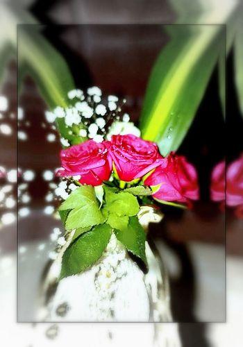 تصويري  Flowers مصوري-العرب رأيكم يهمني #