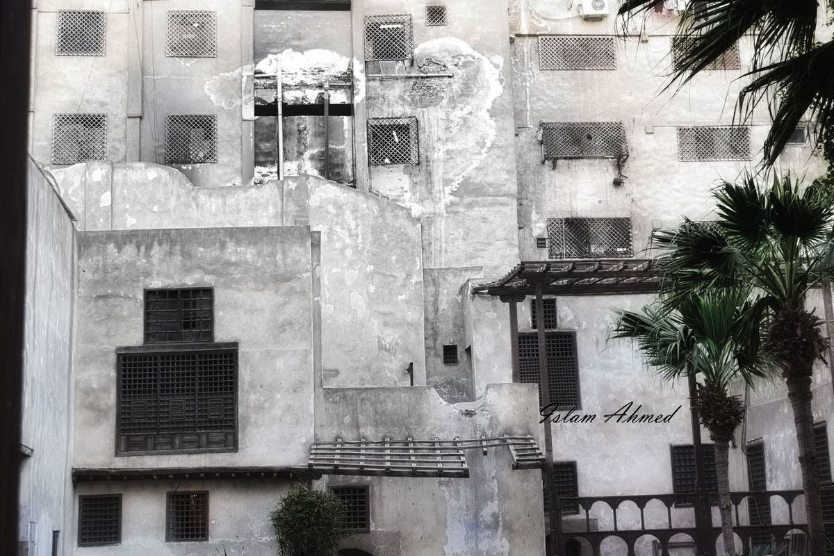 Architecture Black And White Building Exterior Cairo City Day Egypt Moezstreet No People Outdoors Palm Tree Tree Window