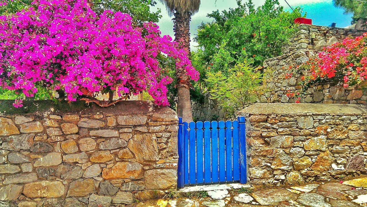 Door Flower Blue Pink Color First Eyeem Photo Trees