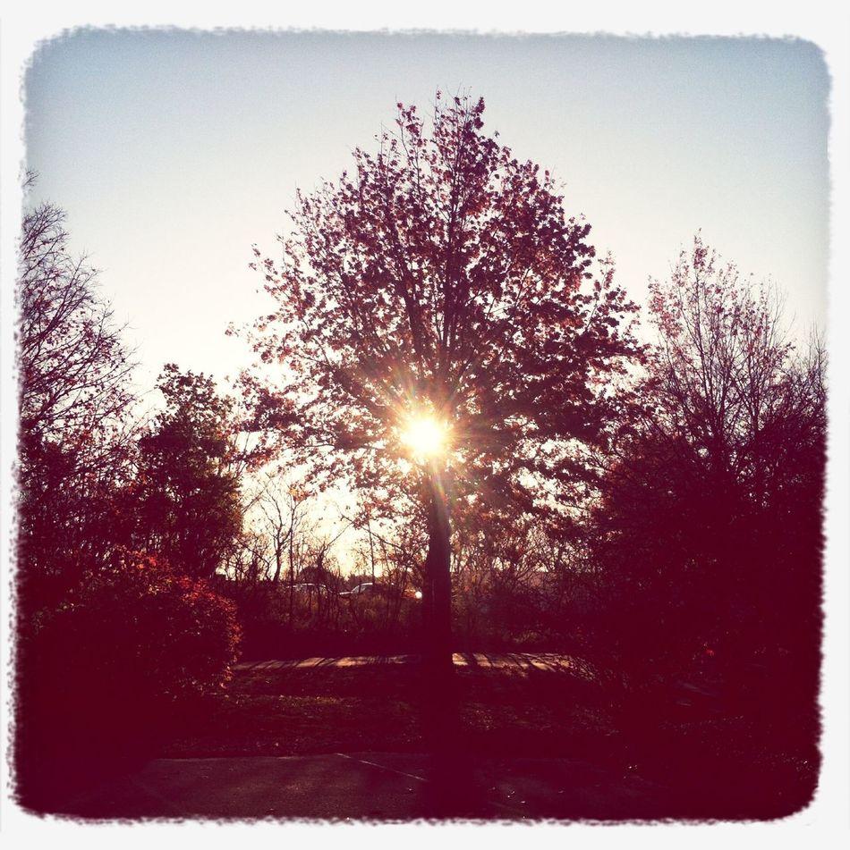Sunrise Morning Sun Autumn