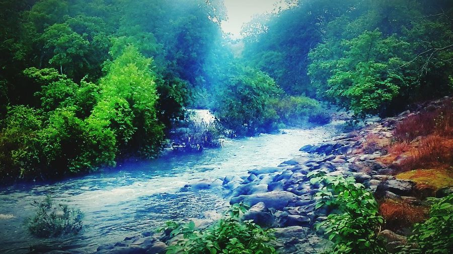 National park, Mumbai. In The Forest Nature On Your Doorstep Protecting Where We Play