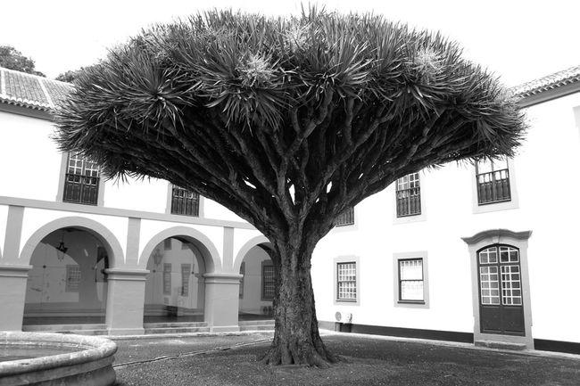 Black & White TreePorn