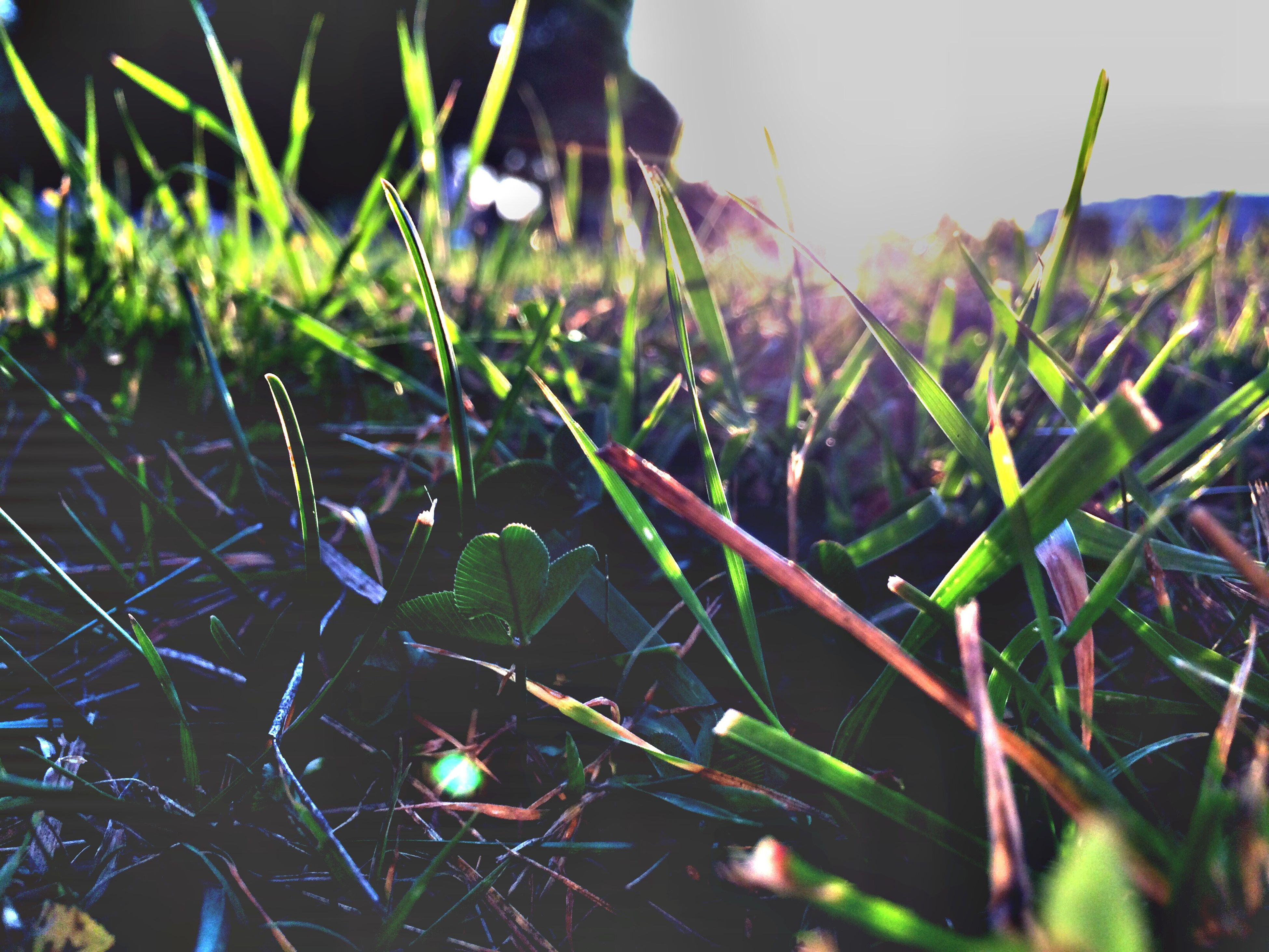 grass, close-up, plant, field, green color, focus on foreground, blade of grass, nature, growth, spider web, selective focus, beauty in nature, outdoors, water, day, tranquility, grassy, drop, sunlight, no people