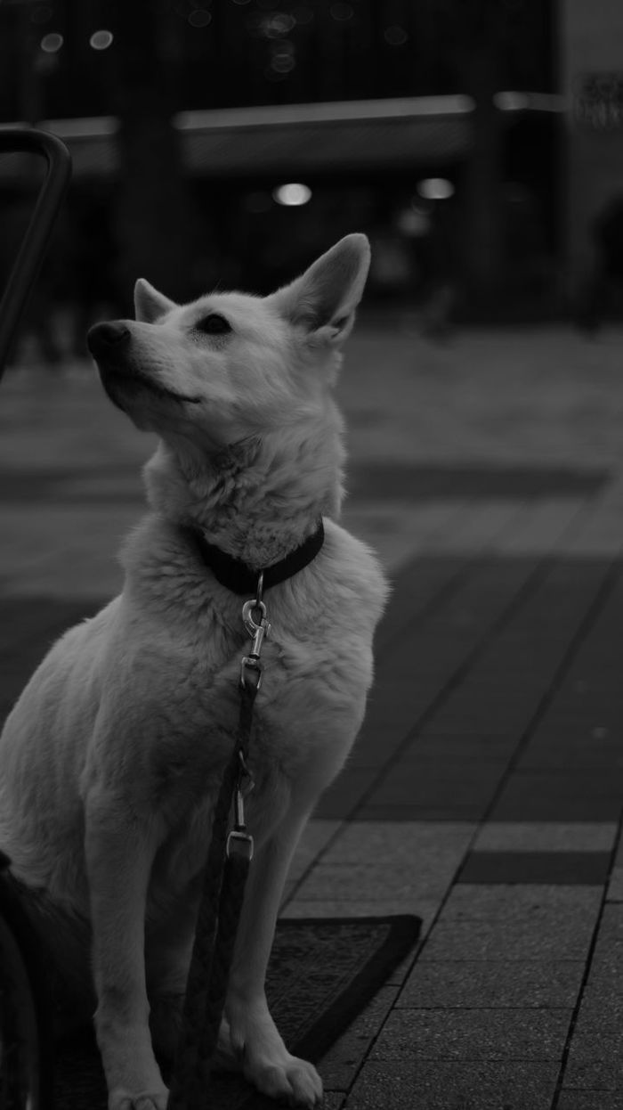 EyeEmNewHere Dog No People Blackandwhite Photography Ghost White Dog Hannover Phil Be The Street Photographer - 2017 EyeEm Awards The Street Photographer - 2017 EyeEm Awards