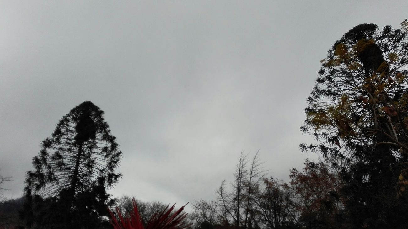 Trees Silouette & Sky Heaven Nofilter#noedit Grey Sky Simplicity Almostblackandwhite