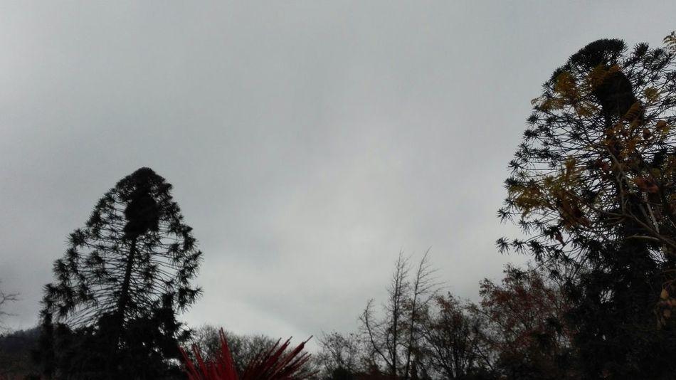 Trees Silouette & Sky Heaven Nofilter#noedit Grey Sky Simplicity Almostblackandwhite