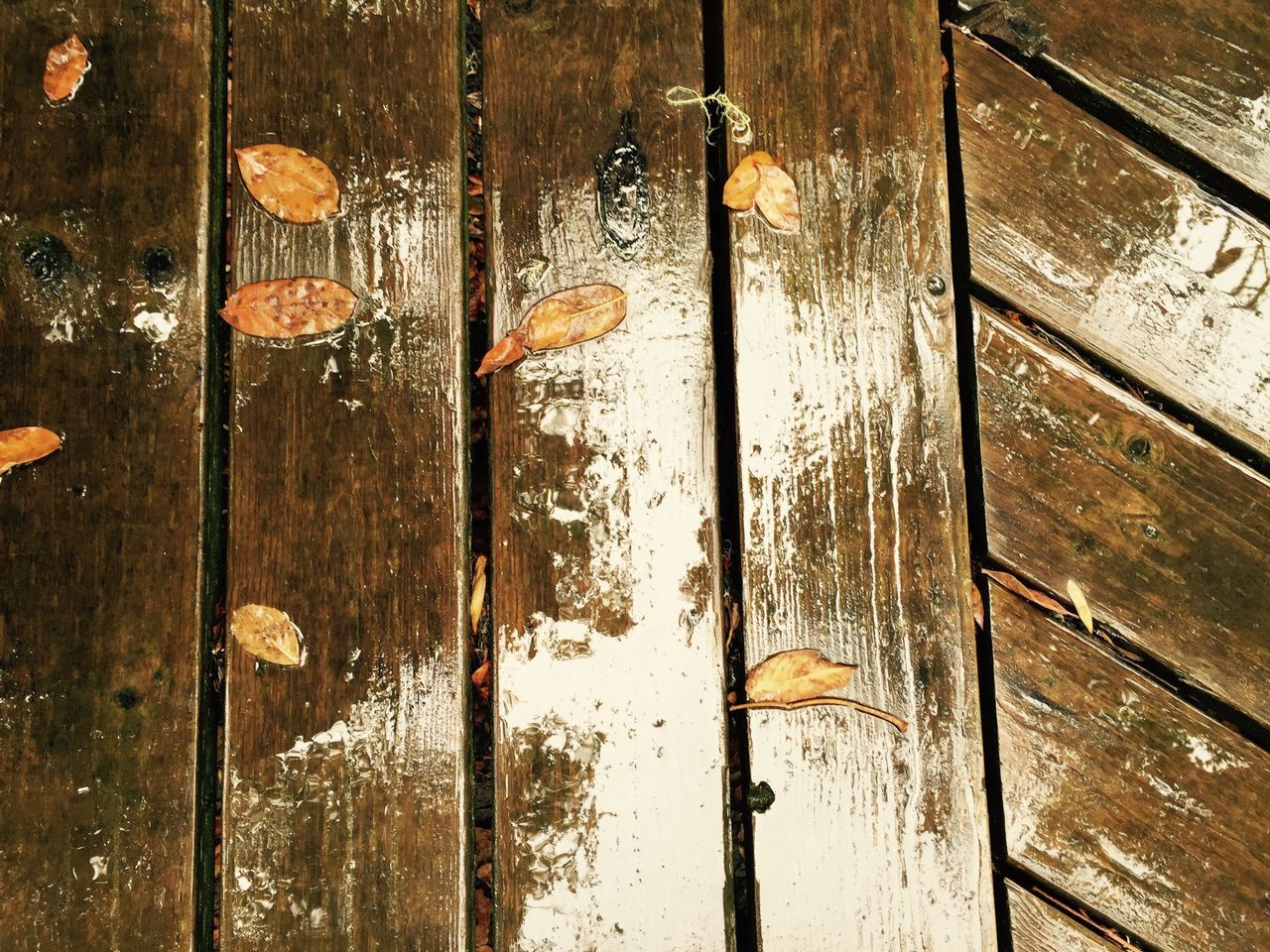 Rainy walkway Angles Backgrounds Close-up Day Full Frame Landscape Leaves Nature No People Outdoors Pattern Rainday RainyDay Reflection Slick Walkway Water Wood - Material