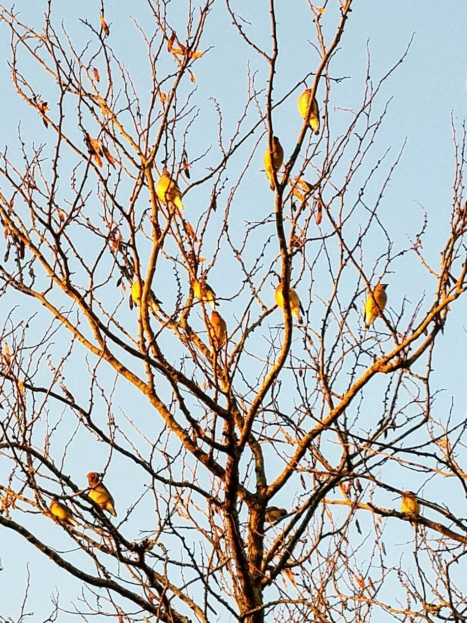 Low Angle View Branch Tree Nature Sky No People Beauty In Nature Outdoors Day Tranquility Animals In The Wild Bird Animal Themes Multiple Animals Birds