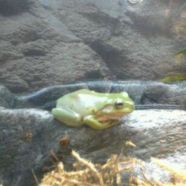 Cute little guy Frog Animals