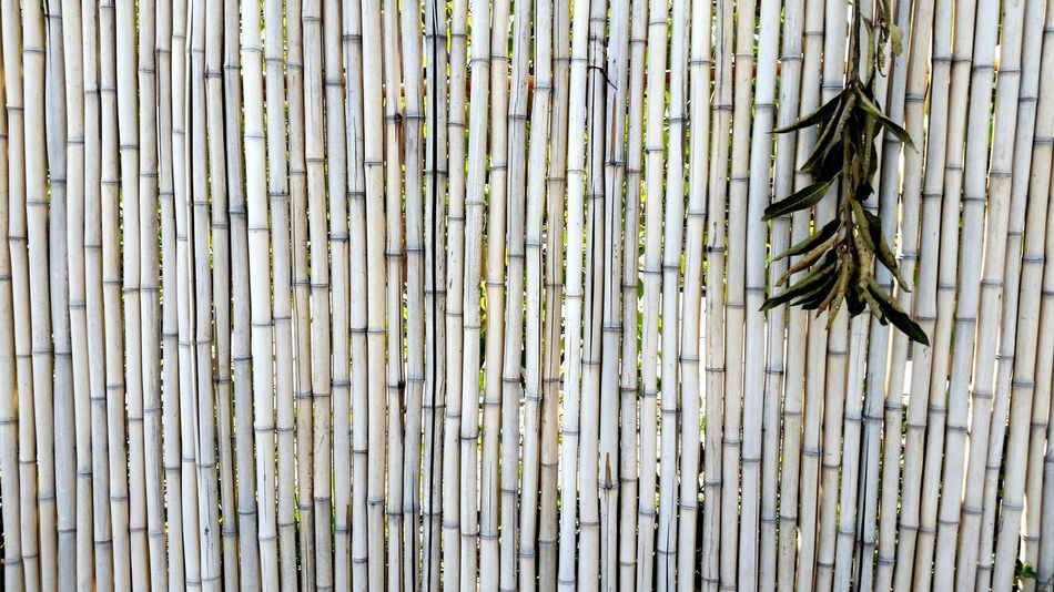 Outdoors Backgrounds Pattern Textured  Wood - Material Full Frame Day No People Bamboo Bamboo Fence