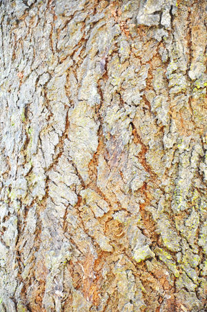 Close Up Pattern Of Tree Bark Texture For Background Abstract Aging Antique Backgrounds Bark Barn Board Corrosion Detail Forest Lumber Nature Old Pattern Pine Plank Rough Skin Surface Texture Timber Tree Trunk Weathered Wood