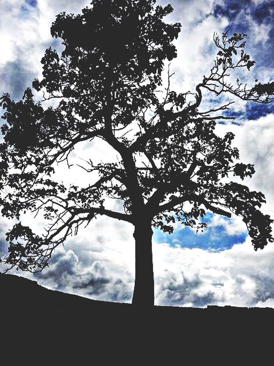 3/3 TreePorn Treelover  Skylover Cloudsplay Cloudy Lovely Nature View Popular Photos Popular Darkness And Light