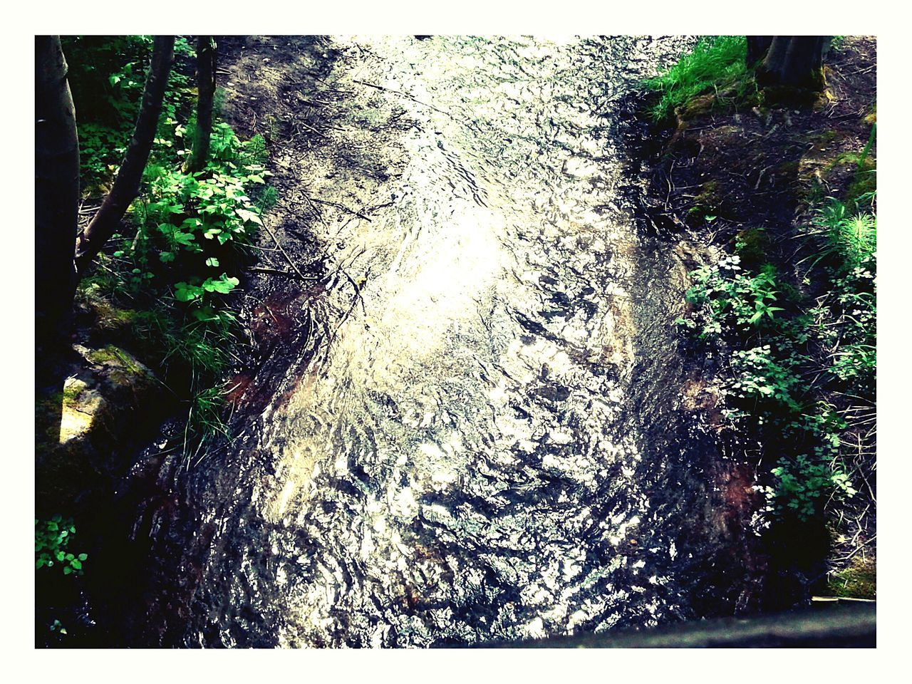 A stream at Dashpoint Statepark
