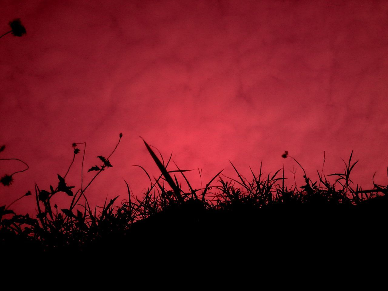 silhouette, nature, sunset, plant, no people, outdoors, growth, tranquility, beauty in nature, red, sky, night, tree, close-up