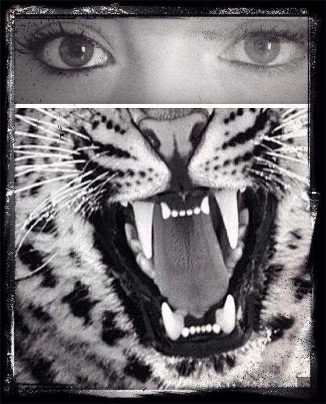 Meow Grrrrr Ahgrrr