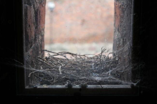 KarolinaP. #bird House #birds #glassart #home #nest #sideview #spider#wildlife #view #Window #windowshot Day Dirty Focus On Foreground Glass - Material Indoors  No People Window Window Frame