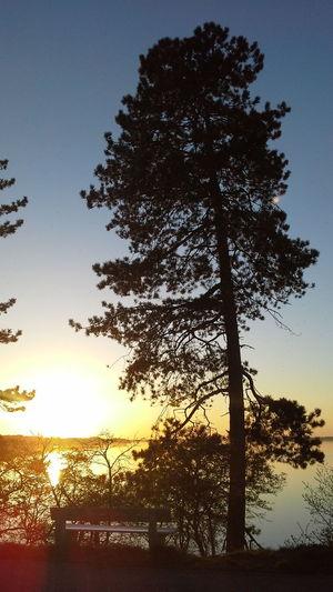 Bank Germany Lake Nature Photography Schleswig-Holstein Sunset Trees