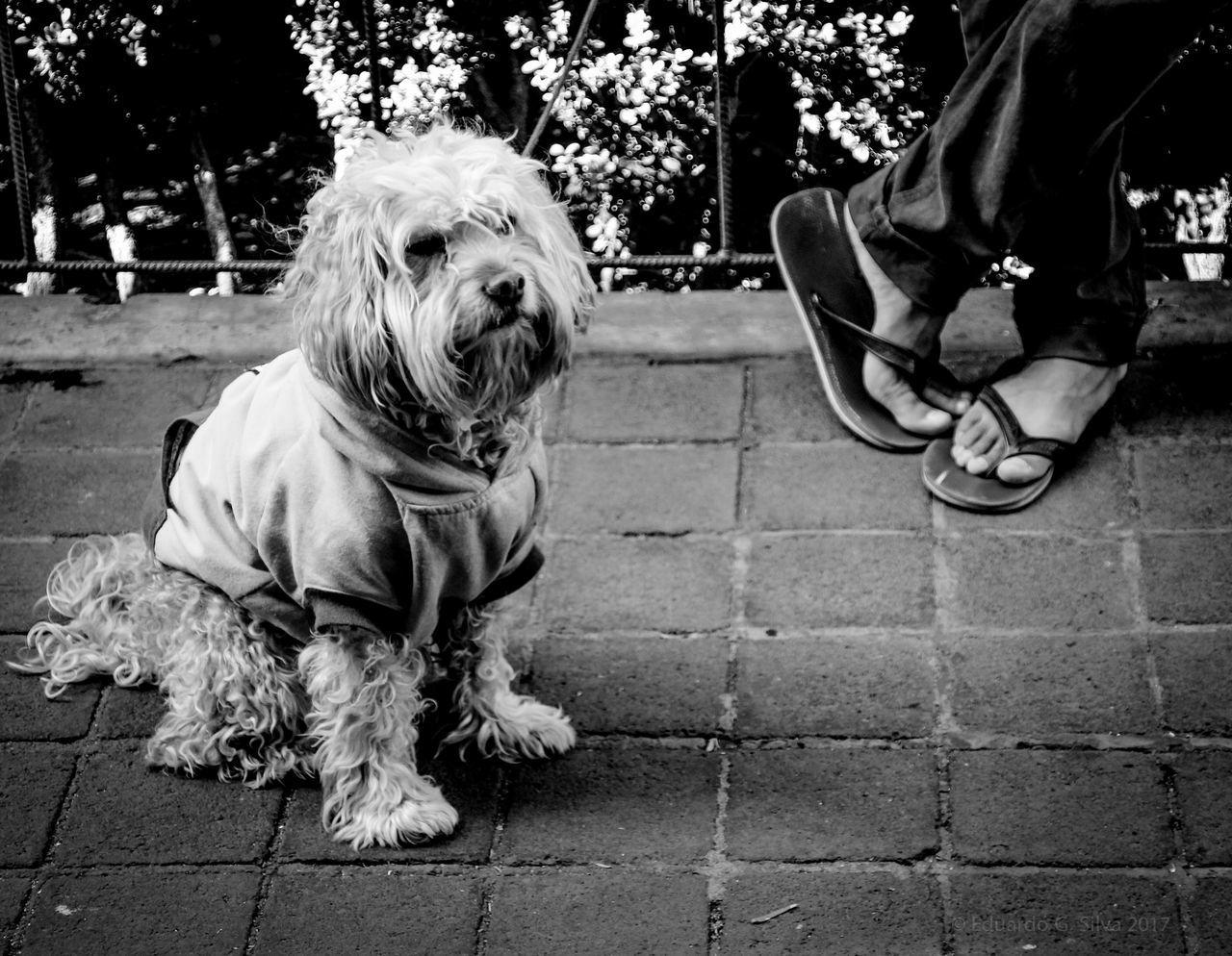 Black & White Dog Pets Domestic Animals Animal Themes Black And White Collection  Black And White Black And White Photography Urbanphotography Street Photography Streetphotography Mexico City
