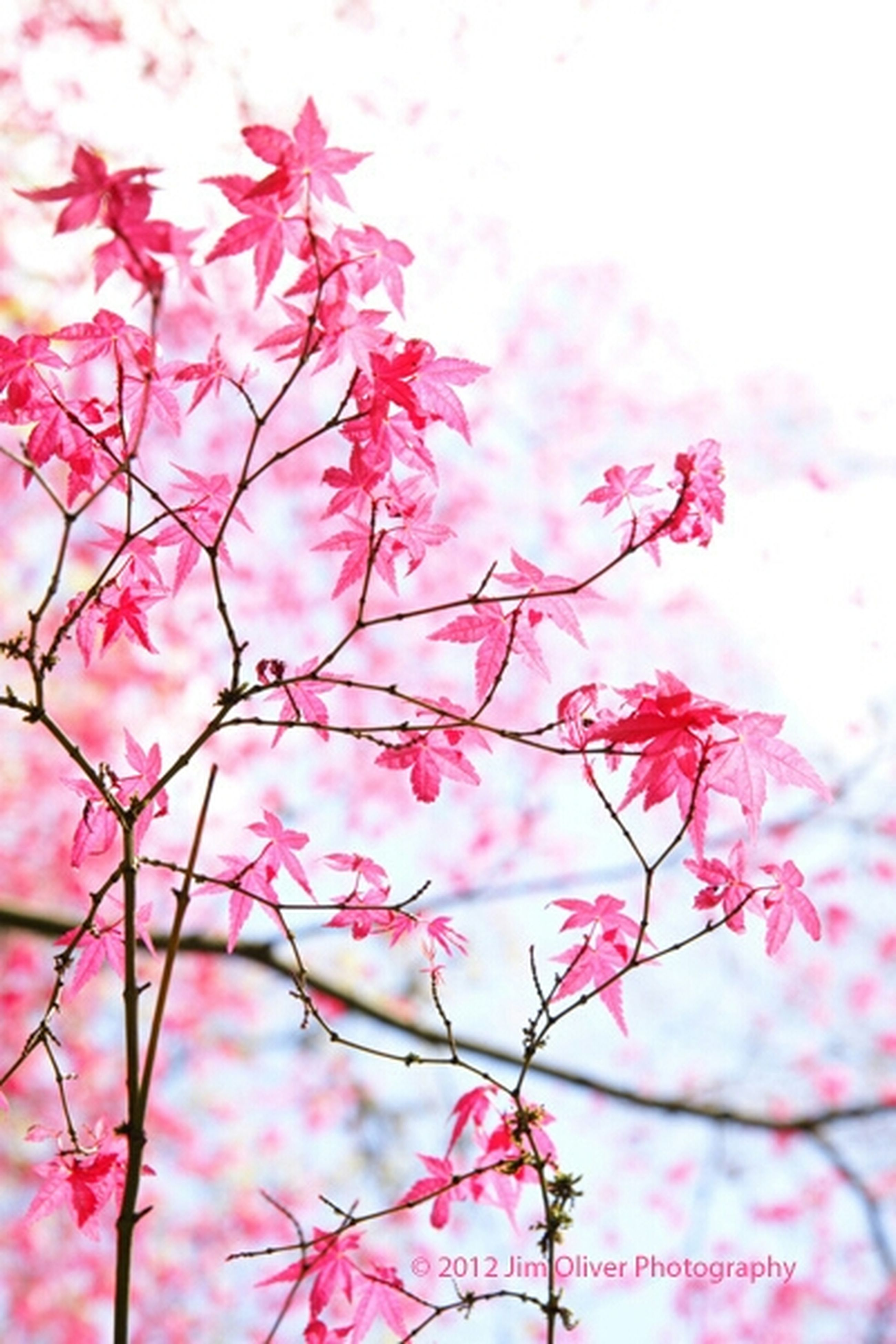 flower, pink color, freshness, growth, beauty in nature, fragility, branch, nature, focus on foreground, sky, close-up, tree, blossom, pink, season, twig, low angle view, plant, stem, petal