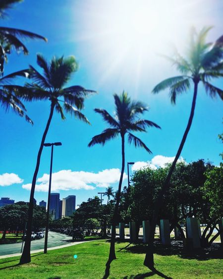Hawaii Alamoanabeach Beachpark Waikiki Honolulu  Hawaii Palm Tree Tree Sunlight Growth Grass Sky Beauty In Nature Blue Outdoors Nature