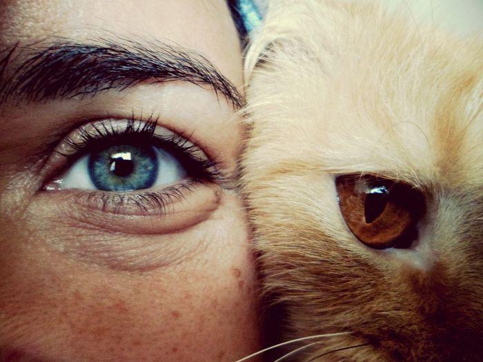 Trazendos algumas das minhas fotos favoritas pro EyeEm. Cateyes Yellowcat Cat♡ Cat Lovers Feline Friend