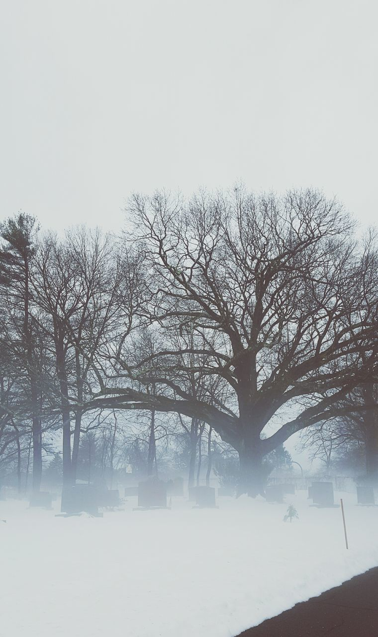 winter, snow, cold temperature, tree, nature, weather, beauty in nature, tranquility, bare tree, tranquil scene, landscape, outdoors, cold, fog, scenics, no people, day, branch, frozen, sky