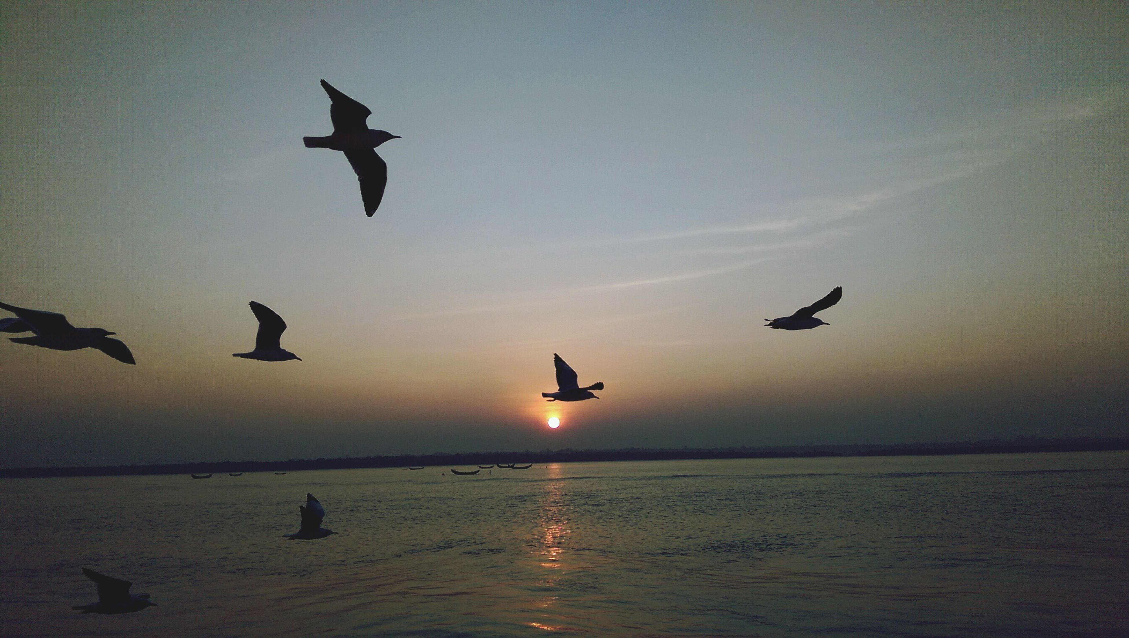 bird, flying, animal themes, animals in the wild, wildlife, mid-air, spread wings, sunset, silhouette, water, sky, flock of birds, seagull, sun, nature, sea, medium group of animals, beauty in nature, scenics
