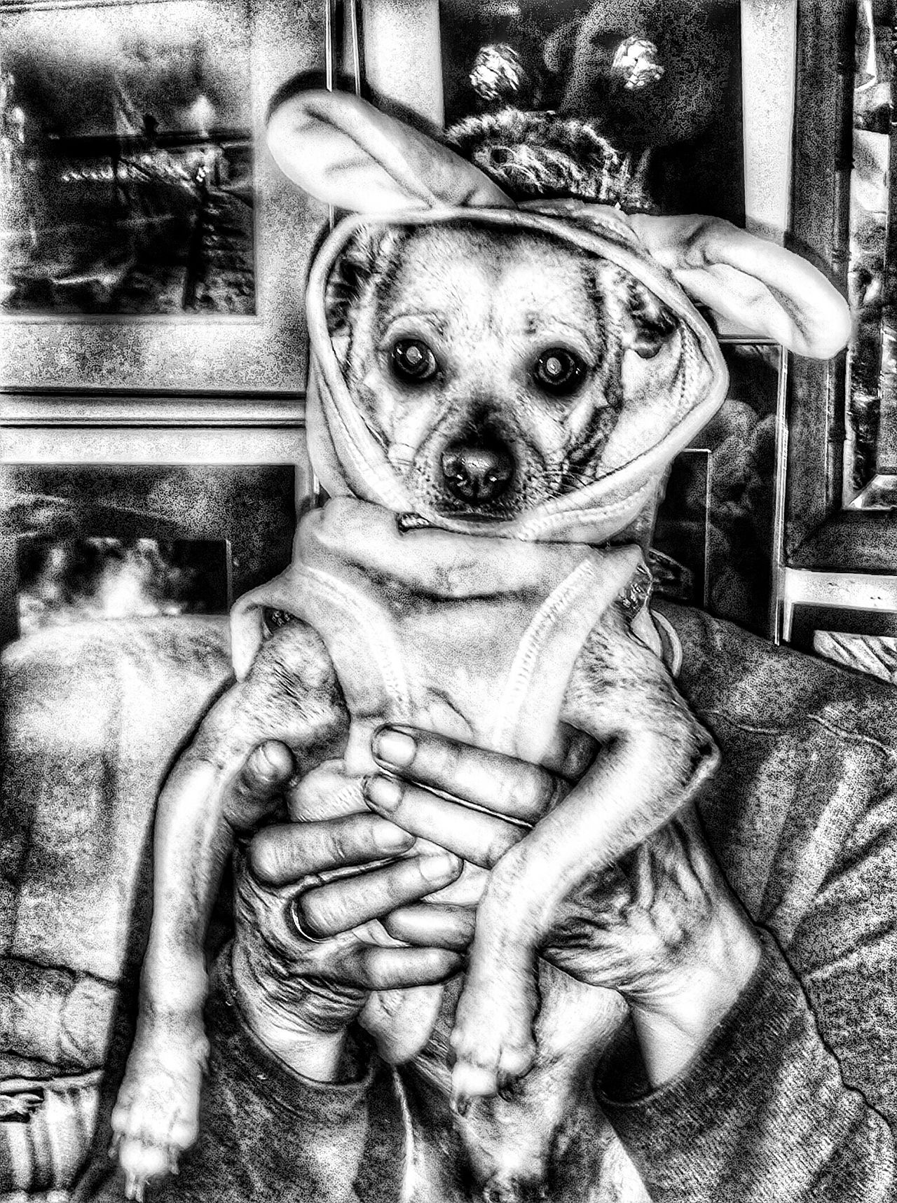 Chachi was cold so i happen to have a bunmy cover he could use to stay warm adopted Enjoying Life Black And White Photography Dog Love Adopt A Shelter Pet Ocean Beach Pet Portrait Special Effects Taking Photos Adopted Adopt Don't Buy!! Adoptee