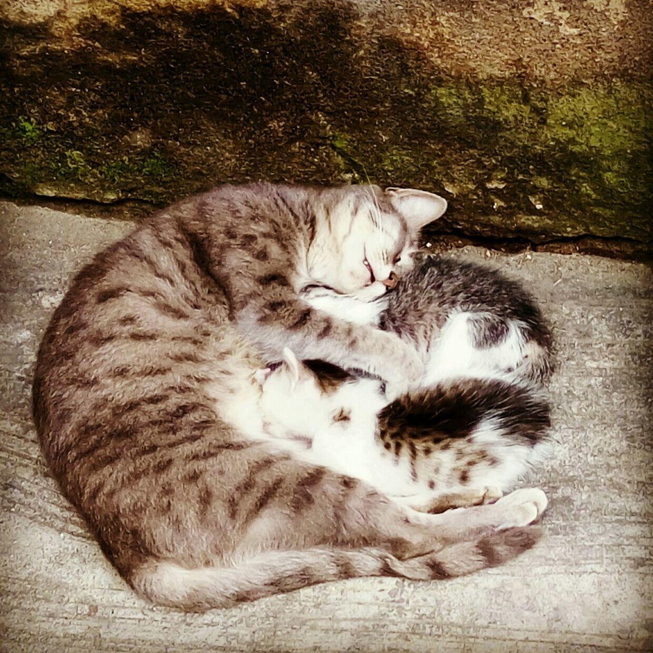 Always Be Cozy Feline Togetherness Lying Down