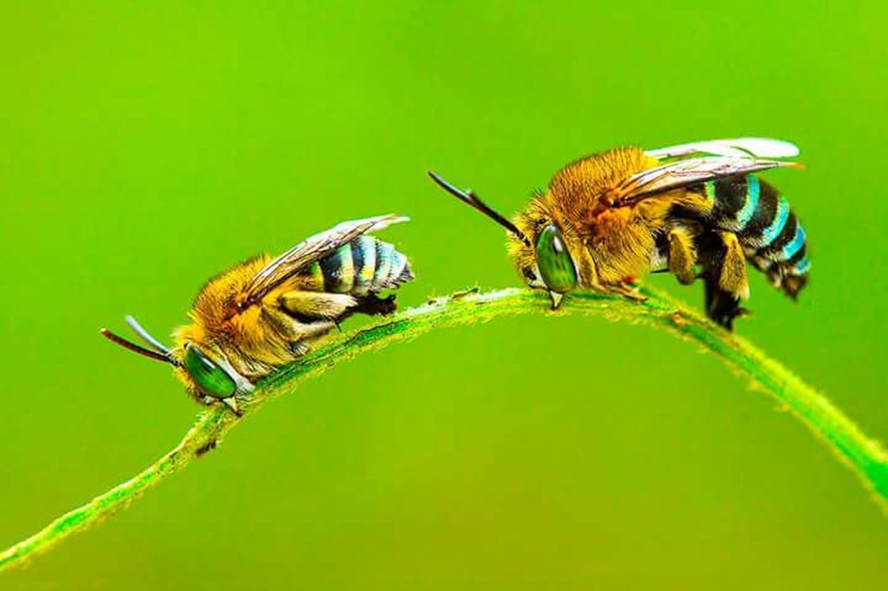 insect, animals in the wild, animal themes, green color, nature, no people, leaf, outdoors, close-up, one animal, day, plant, flower, beauty in nature, freshness