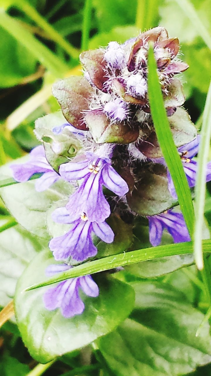 Close-Up Of Purple Flowers With Green Leaves