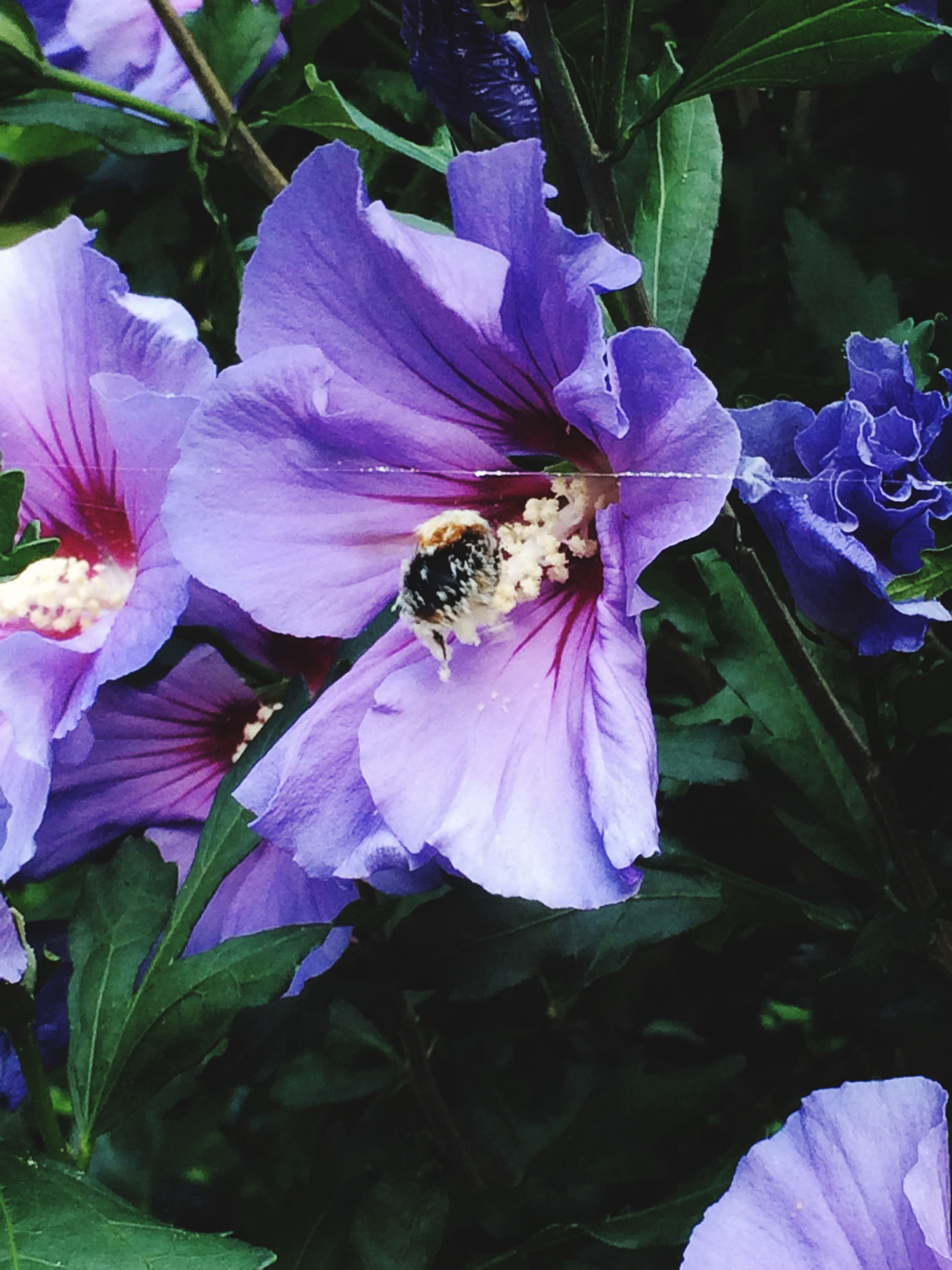 flower, petal, freshness, fragility, insect, purple, one animal, flower head, animal themes, growth, beauty in nature, animals in the wild, wildlife, close-up, plant, nature, blooming, focus on foreground, bee, pollination