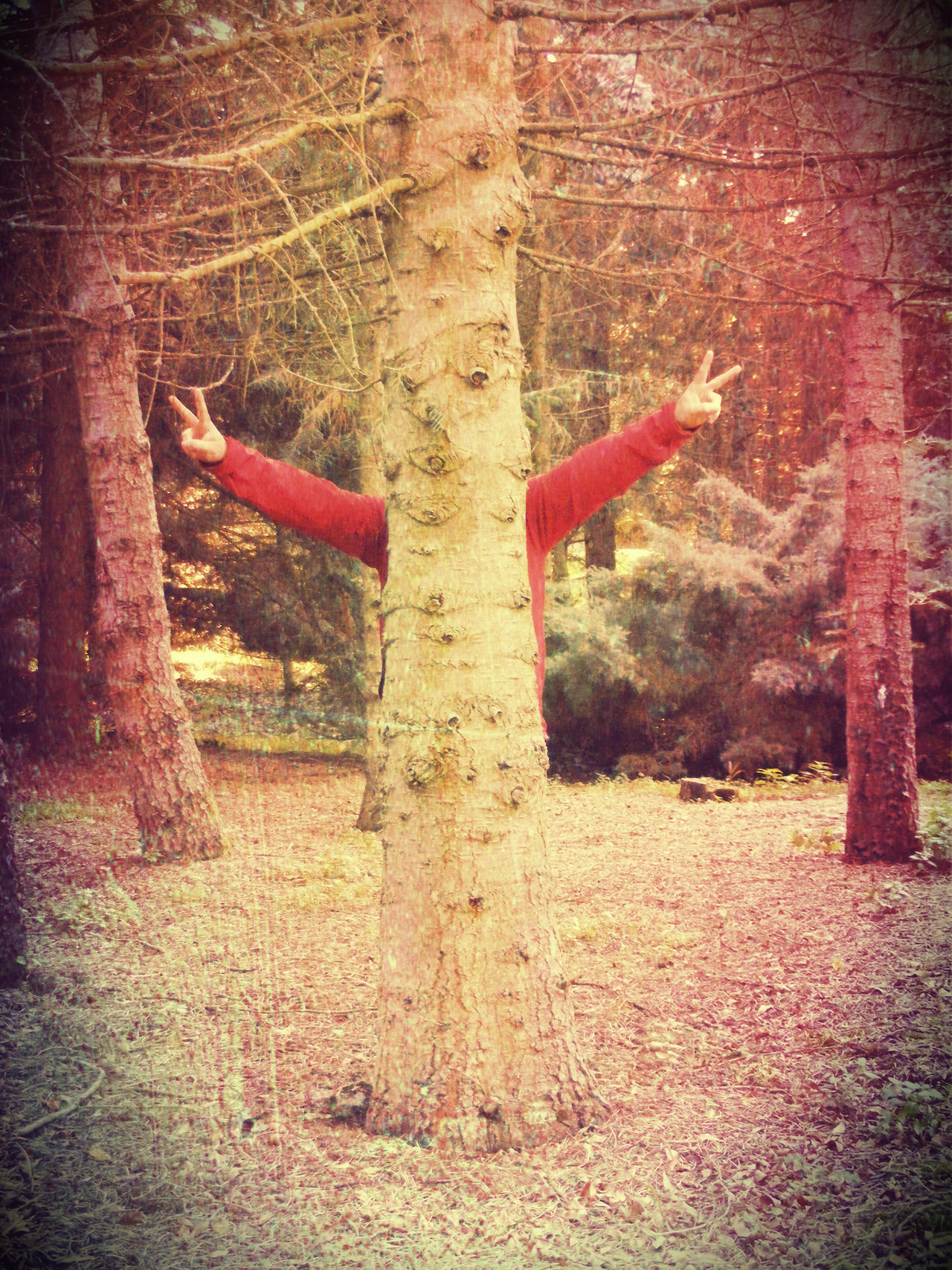 man behind a treetrunk Arms Outstretched Frolic Fun Hand Signs Man Behind A Treetrunk Peace And Quiet Real People Two With Finger