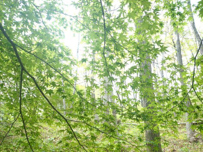 Relaxing Japan Landscape Trees
