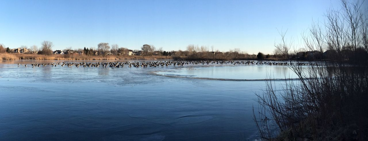 Water Clear Sky Nature Beauty In Nature Tree Blue The Secret Spaces Reflection Scenics Day Tranquility No People Built Structure Outdoors Architecture Sky Cold Temperature Frozen Lake Geese Geese Photography Geese Gathering Oswego, IL Panorama Panoramic Photography The Week On Eyem The Great Outdoors - 2017 EyeEm Awards