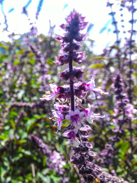 Zenfone2 Zenfonegraphy Fv5camera Bee