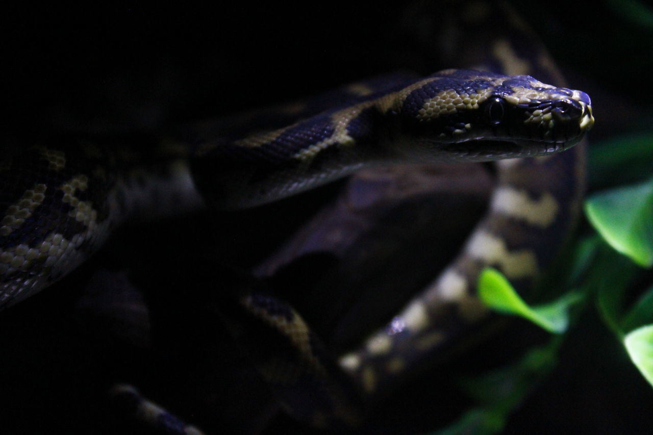one animal, reptile, animal themes, animals in the wild, no people, animal wildlife, close-up, nature, day, outdoors