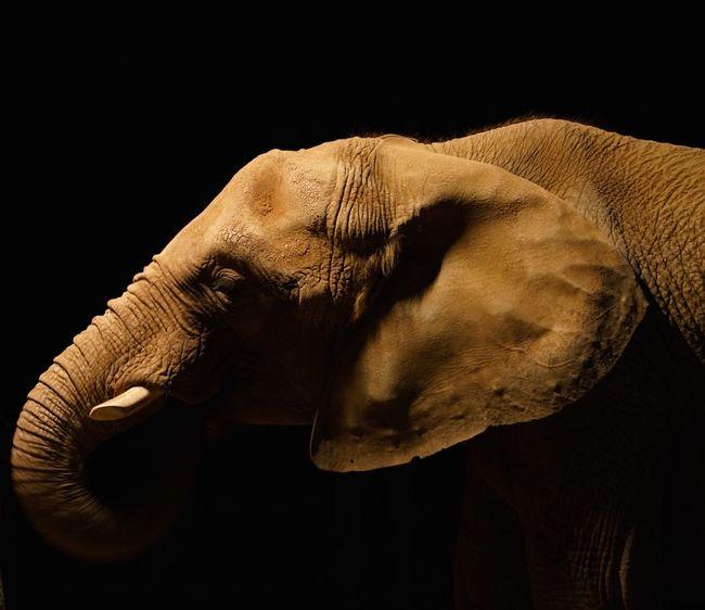 Alpha SONY A7ii San Diego Zoo Nature Elephant