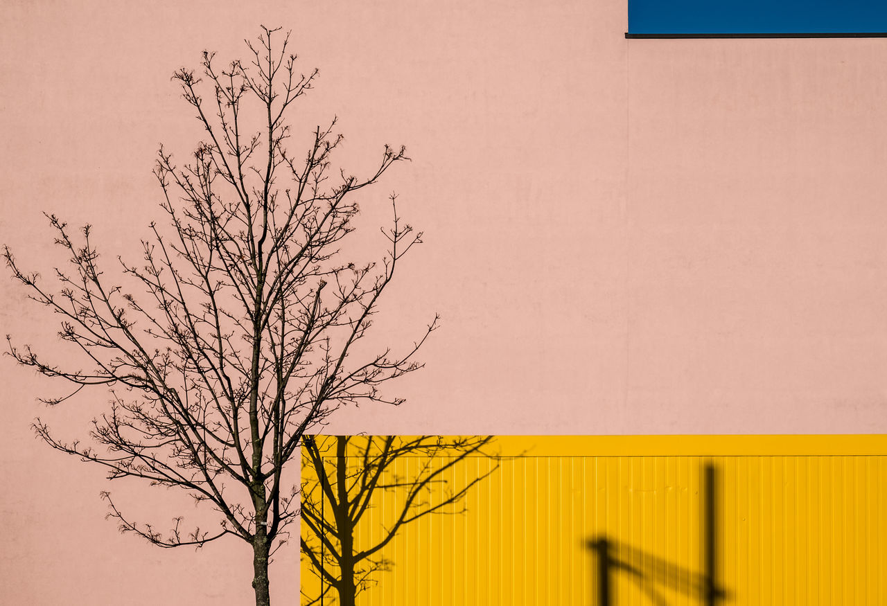 Beautiful stock photos of design,  Architecture,  Bare Tree,  Berlin,  Branch
