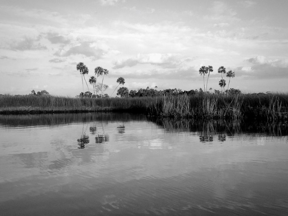 Open Edit Bnw_friday_eyeemchallenge Blackandwhite Monochrome Landscape Nature Water Reflections Eye4photography  EyeEm Best Shots River Palm Trees Black And White Tranquility
