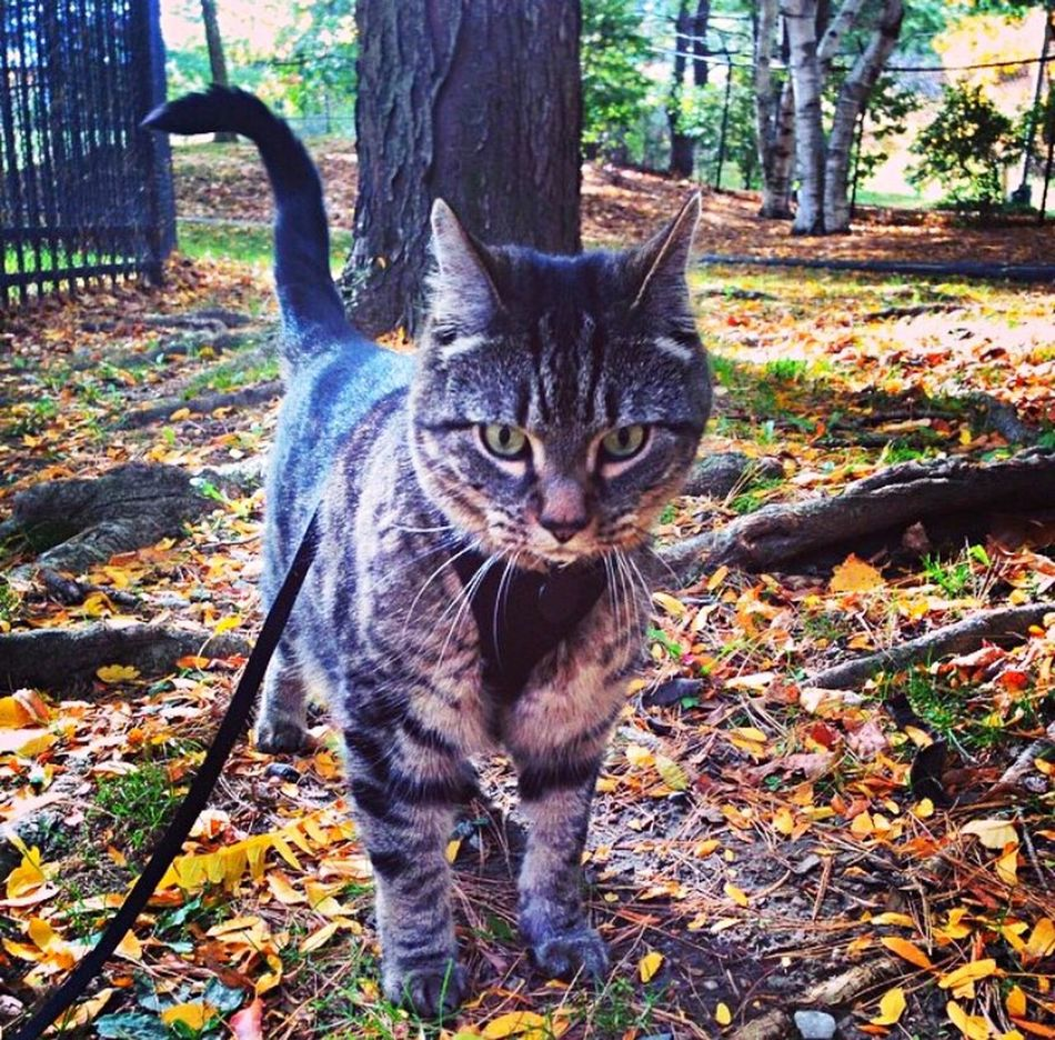 Jakethecat First Eyeem Photo