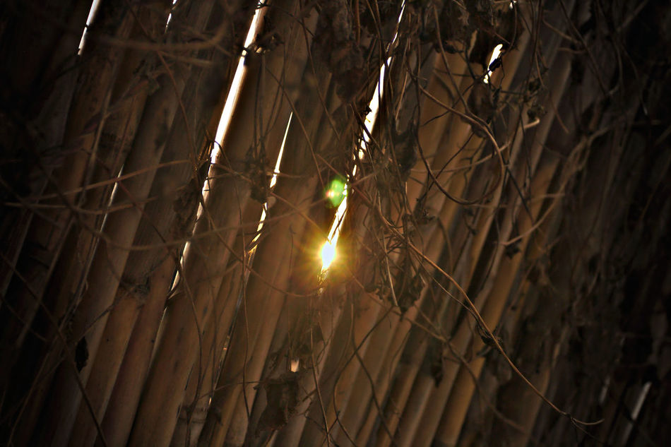 Bamboo Bamboo Fence Bamboo Grove Fence Fine Art Photography From My Point Of View Illuminated Outdoors See Through Still Life Sun Rays Penetrating Sun Rays Through Trees Sun Set Sun Through A Wall Sun Through The Trees Sunset Sunset Silhouettes Sunset_collection Textured
