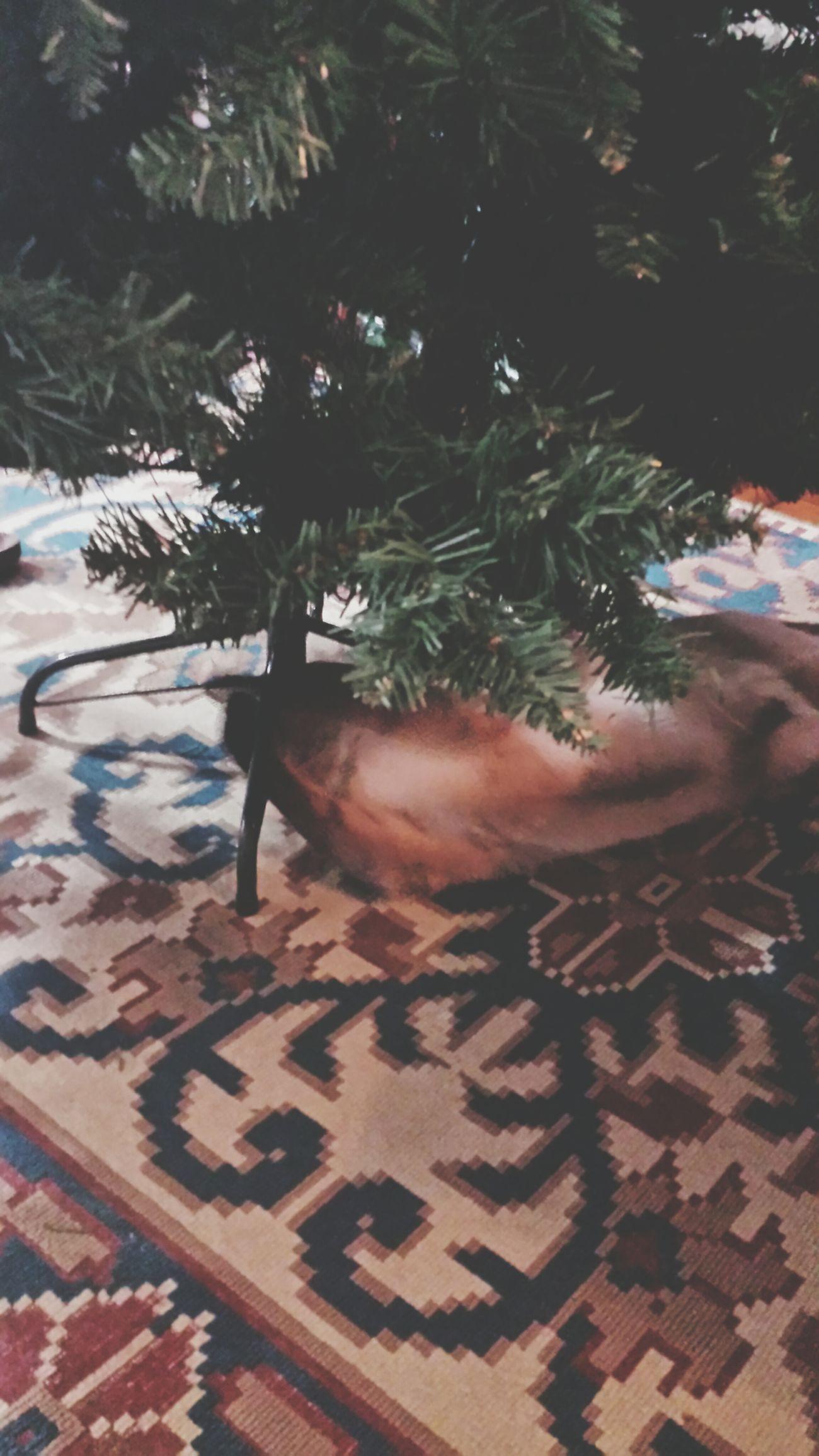 Xcrhistmas Cat